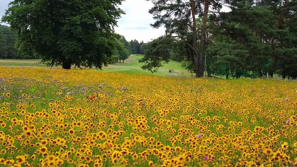 Wildflowers_Rheinblick_Golf_Course.jpg